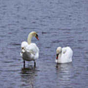 At Your Service. Mute Swan Poster