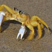 An Atlantic Ghost Crab Playing In The Tide 3 Poster