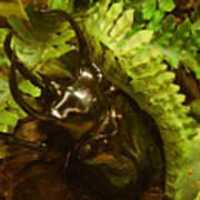 Atlas Beetle Poster