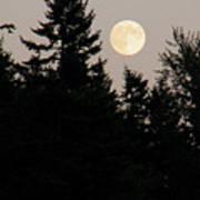 August Full Moon - 1 Poster
