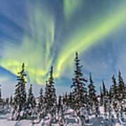 Aurora Borealis Over The Trees Poster
