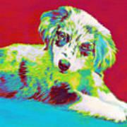 Aussie Puppy Poster