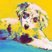 Aussie Puppy-yellow Poster