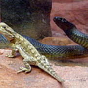Australia - The Taipan Snake Poster