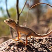 Australian Dragon Poster