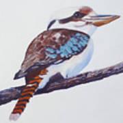 Australian Kookaburra Or Kingfisher Poster