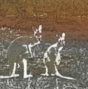 Australian Red Kangaroos Poster