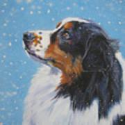 Australian Shepherd In Snow Poster