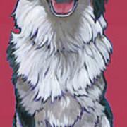 Australian Shepherd Poster