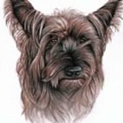 Australian Terrier Poster