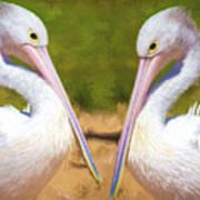 Australian White Pelicans Poster