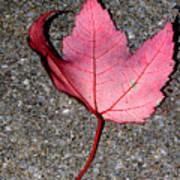 Autum Maple Leaf 2 Poster