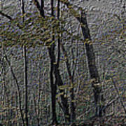 Autumn 2015 Panorama In The Woods Pa 01 Poster