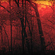 Autumn 2015 Panorama In The Woods Pa 06 Poster