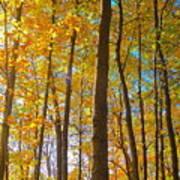 Autumn Afternoon Light Poster