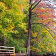 Autumn Along Brices Creek Poster