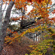 Autumn At Beech Forest Poster