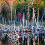 Autumn At Moosehead Bog Poster