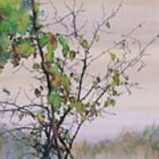 Autumn Birch By Sand Creek Poster by Carolyn Doe