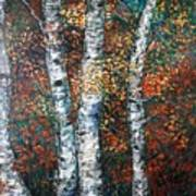 Autumn Birch Poster
