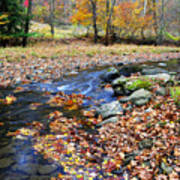 Autumn Birch River Poster