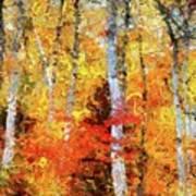 Autumn Birches Poster