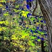 Autumn Blue  Poster