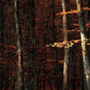 Autumn Branch Poster