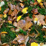 Autumn Carpet 002 Poster