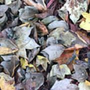 Autumn Carpet II Poster