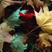 Autumn Carpet Poster