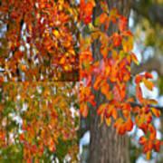 Autumn Collage Poster
