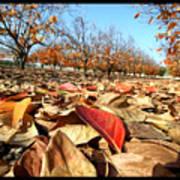 Autumn Colors 04 Poster