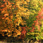 Autumn Colors II Poster