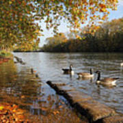 Autumn Colours At Sunbury On Thames Surrey Uk Poster