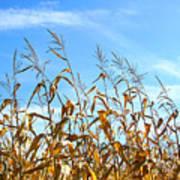Autumn Corn Poster by Sandra Cunningham