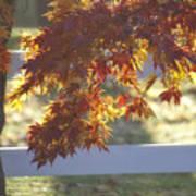 Autumn Elegance Poster