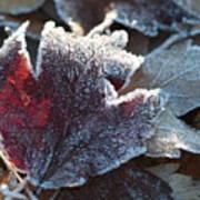 Autumn Ends, Winter Begins 2 Poster