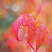 Autumn Fires Poster