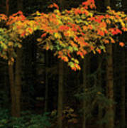 Autumn Forest Leaves Poster