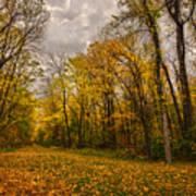 Autumn Forest Poster by Stuart Deacon