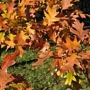 Autumn Fragrance Poster