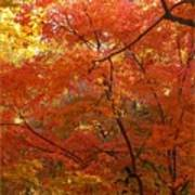 Autumn Gold Poster Poster