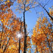 Autumn Gold Sunburst Poster