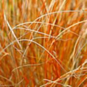 Autumn Grass Abstract Poster