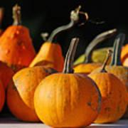 Autumn Harvest Gourds Poster