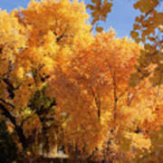 Autumn In Curtin Poster