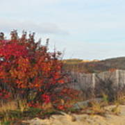 Autumn In The Dunes Poster