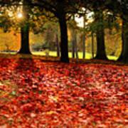 Autumn In Woodthorpe Poster