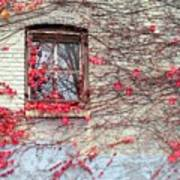Autumn Ivy Poster
